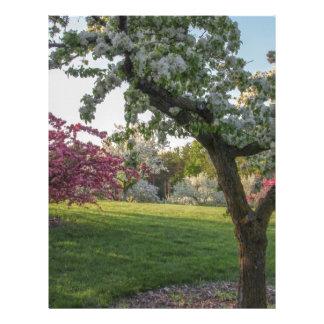 Trees Flower in the Spring Letterhead