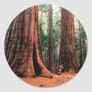 Trees Giants Calaveras Classic Round Sticker
