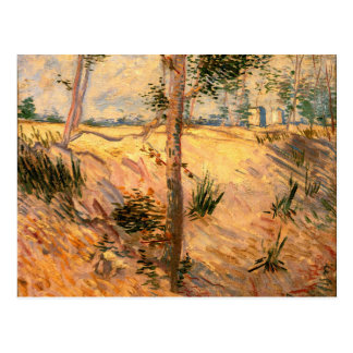 Trees in a Field on a Sunny Day Postcard