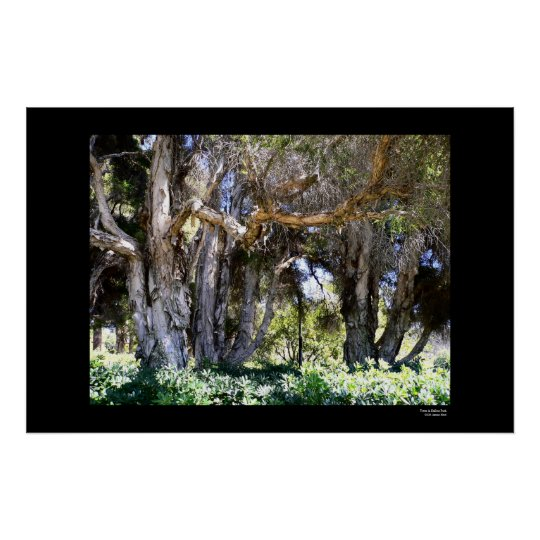 Trees in Balboa Park Poster