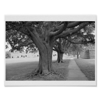 Trees in Black and White Poster