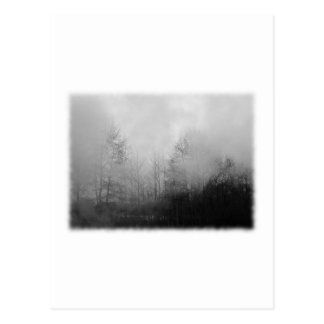 Trees in Mist. Black and White. Postcard