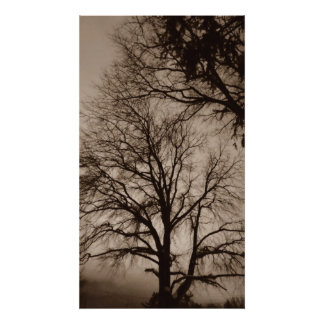 Trees in Sepia art Photograph