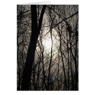 Trees in Shadow Card