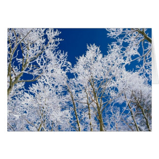 Trees In Winter Customizable Gifts and Cards