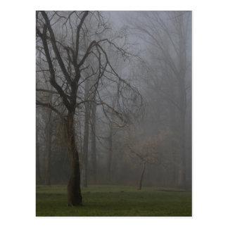 Trees in Winter Mist Postcard