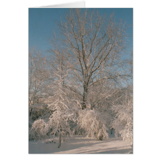 Trees laden with Snow Notecards Card