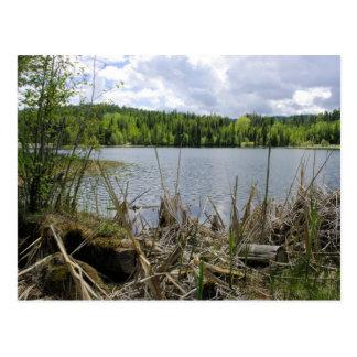Trees Lake and Sky  Marshall Lake Boundary B.C. Postcard
