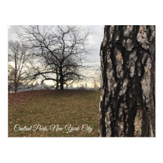 Trees New York NYC Sunrise Central Park Skyline Postcard