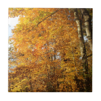 Trees of Fall Tile