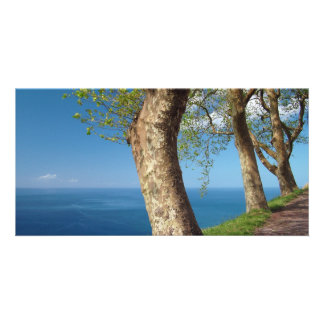 Trees overlooking the ocean personalized photo card