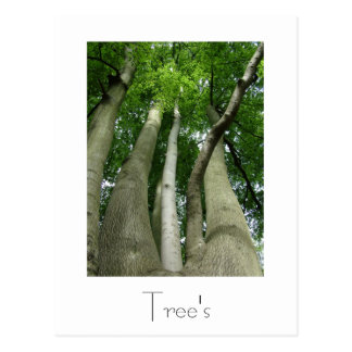 Trees Postcard Design