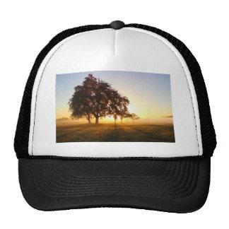 Trees RK sunrise Trucker Hat