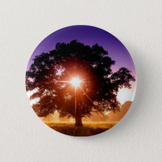 Trees Tree Of Life Devon England 2 Inch Round Button