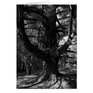 Trees, UC Santa Cruz, 1963 Card