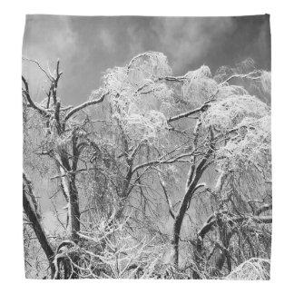 trees wear winter bandanna