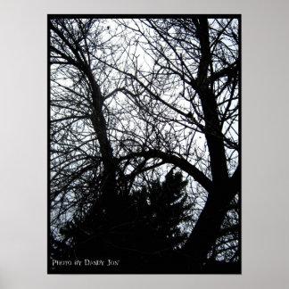 TreeShadow Poster