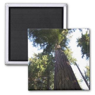 Treetops. Magnet