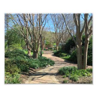 Tremendous Tree lined walkway Photo