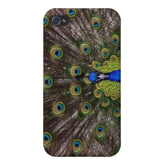 Trendy Peacock iPhone 4 Case