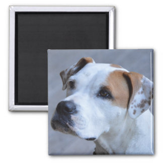 Trendy Personalized Pet Photo Magnet