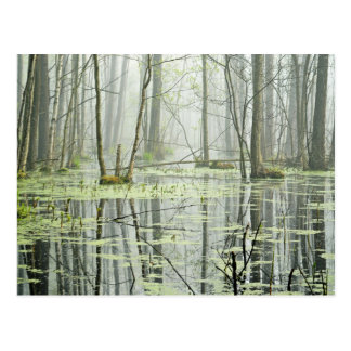 Tress in water pond postcard