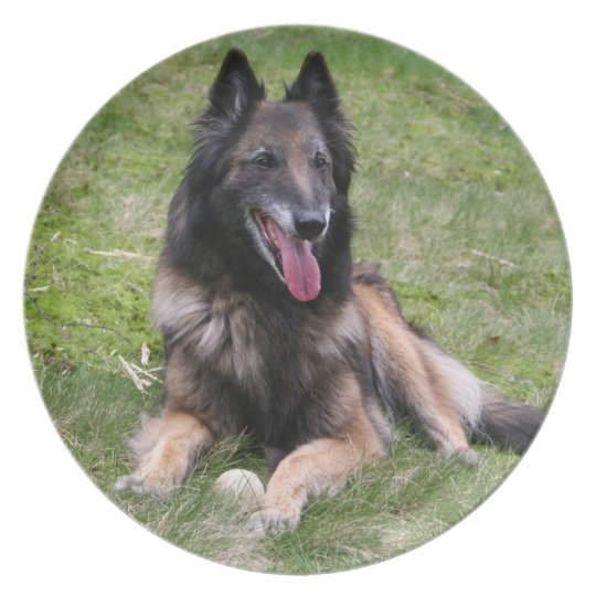 Trevuren Belgian Shepherd dog photo plate, dish