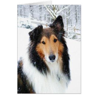 Tri-Color Snow Collie Card