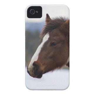 Tri-Colored Horse iPhone 4 Covers