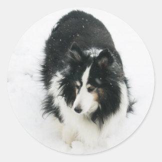 Tri Sheltie in Snow Classic Round Sticker