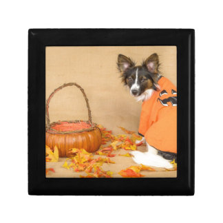 Trick or Treat Chihuahua Dog Gift Boxes
