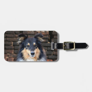 Tricolor Sheltie face Luggage Tag