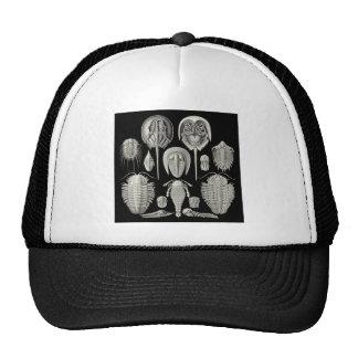 Trilobite! Hats