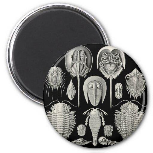 Trilobite! Fridge Magnet