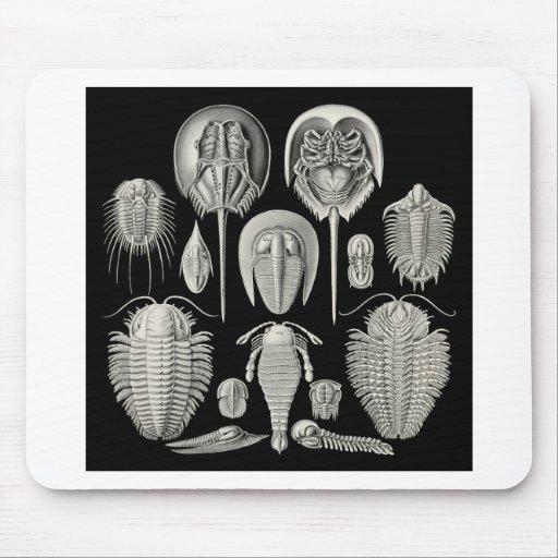 Trilobite! Mouse Pad