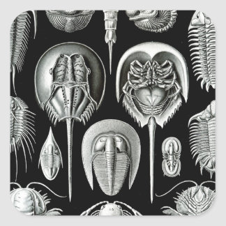 Trilobites and Fossils in Black and White Square Sticker