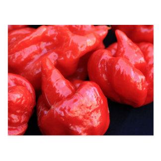 Trinidad Moruga Scorpion Chili Pepper Postcard