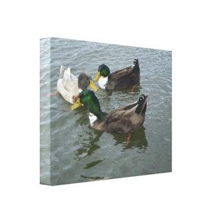 Trio Mallard Ducks Canvas Wrap