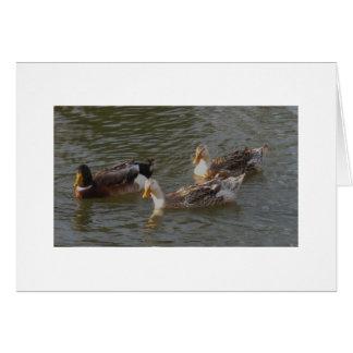 Trio Of English Silver Appleyard Ducks Card