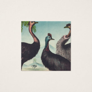 Trio of Ostriches Square Business Card