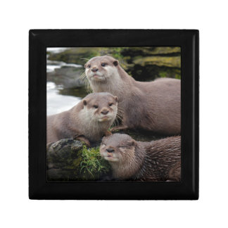 Trio of Otters Keepsake Box