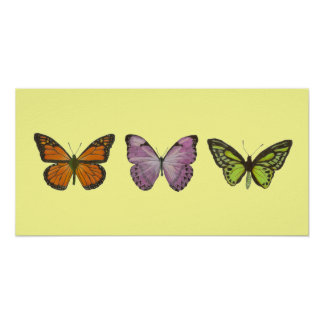 Triple Butterfly Poster Horizontal