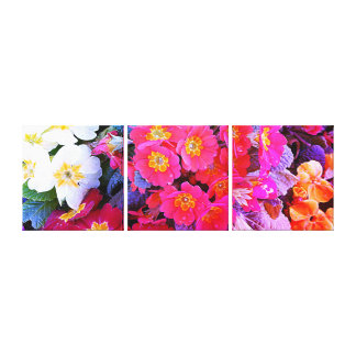 Triple Canvas Print - Polyanthus Flowers