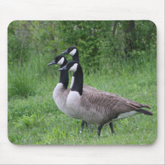 Triple Duck Stare Down Mouse Pad