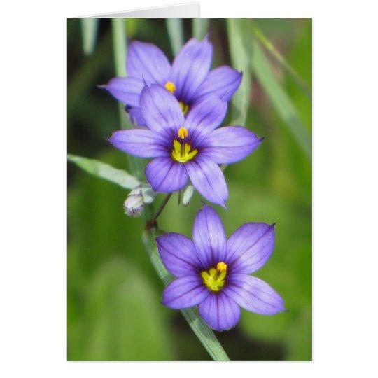 Triple Purple Card