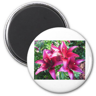 Triple Red Lillies 2 Inch Round Magnet