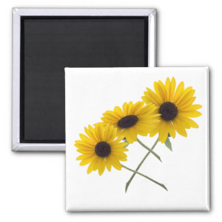 Triple Sunflower Square Magnet