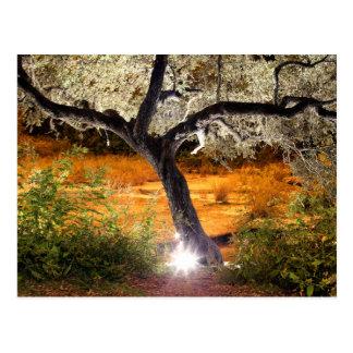 Trippy Oak Tree Postcard