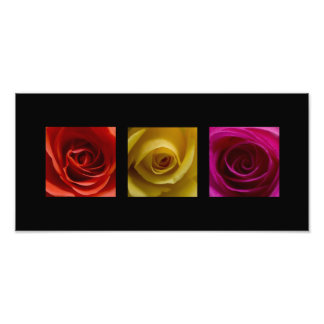 Triptych Roses orange yellow pink Panoramic Photo