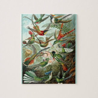 Trochilidae - Ernst Haeckel 8x10 Jigsaw Puzzle